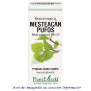 Extract din Muguri de Mesteacan Pufos 50 ml PlantExtrakt