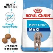 15 kg Maxi Junior Active Royal Canin pienso para perros