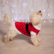 Geen Kerstman kostuum voor de hond