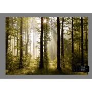 Ag Design Morning Forest Fotobehang 4D (AG Design)