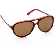 Lacoste Aviator Sunglasses(Brown)