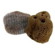 Mořská houba žlutá pacifická > varianta 18-19 cm
