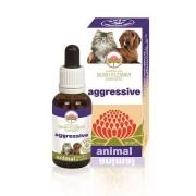 Bush Biotherapies Pty Ltd Aggressive 30ml