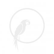 Kare Loungestoel Blue Sky Summer