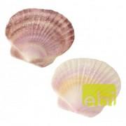 EBI AQUA DELLA SEA-SHELL 10,5x10,5x1cm - L