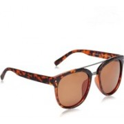 Daniel Klein Wayfarer Sunglasses(Brown)
