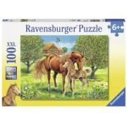 Puzzle Cai Pe Camp 100 Piese