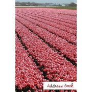 Address Book.: (Flower Edition Vol. E81) Pink Tulip Design. Glossy Cover, Large Print, Font, 6 X 9 for Contacts, Addresses, Phone Num
