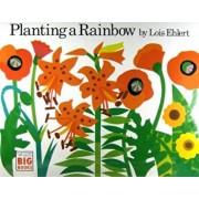 Planting a Rainbow, Paperback/Lois Ehlert