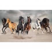 Bellatio Decorations Poster paarden galopperend in het zand 84 x 52 cm