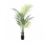 EUROPALMS Areca palm with big leaves, 125cm