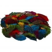 Merkloos 100x Gekleurde parelhoen sier veren
