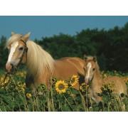 Пазл - «Лошади в подсолнухах» XXL 200 шт