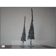 Grey twig tree