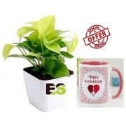 ES YELLOW MONEY PLANT WITH FANCY WHITE POT COMBO With Gift Anniversary Gift Mug
