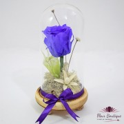 """""""Purple Rose Forever"""" in cupola"""