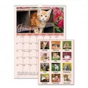 Kittens Wall Calendar, 12 X 17, 2017
