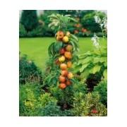 Măr columnar