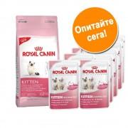 - За проба: 400 г суха храна British Shorthair Kitten + 12 x 85 г Instinctive в сос