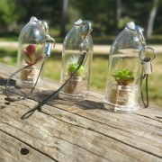 Babyplante, la mini plante cactus de poche