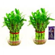 2 Layer Lukcy Bamboo (Set of 2 PCS)