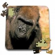 Danita Delimont - Gorillas - Captive western lowland gorilla - NA02 MWT0079 - Michele Westmorland - 10x10 Inch Puzzle (pzl_84151_2)