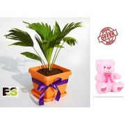 ES TABLE PALM GREEN WITH FREE COMBO GIFT - 6 TEDDYBEAR-PINK