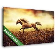 Búzamezőn vágtató ló, naplementében (40x25 cm, Vászonkép )