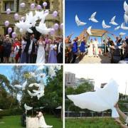 Baloane în formă de porumbei