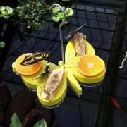 Vlinder voederschaal vlindervorm