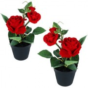 Wonderland Red Rose with plastic pot (Set of 2)