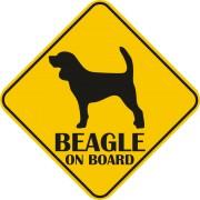 Sticker auto - Beagle