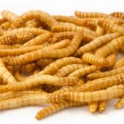 Vivara Gevriesdroogde meelwormen 100 g