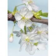 Fototapet cu flori albe - Inflorire