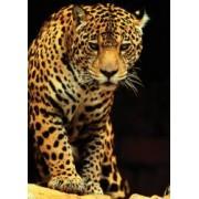 Puzzle 1000 piese Leopard