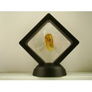 Make Your Own Gold Bars Make Your Own Gold Bars Baltic Amber Fossil with Insect Inside - Specimen in Display Case #A6