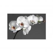 FIRST Heating WIST NG Infrarot-Bildheizung 90 x 60 / 800 W (WIST Motive: Orchid, Rahmen: Ohne Rahmen)