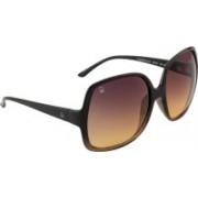 United Colors of Benetton Wayfarer Sunglasses(Brown)