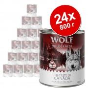 Икономична опаковка: Wolf of Wilderness 24 x 800 г - White Infinity - конско