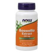 Now Foods Boswellia Extract 250 mg 60 kapslí - 60 kapslí