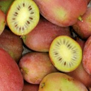 Kiwi BINGO