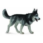 Caine Husky Siberian L - Animal figurina