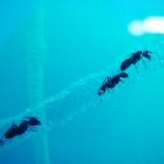Ecosphère ronde (diamètre: 23 cm)