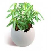 Taneční rostlinka - DOPRODEJ