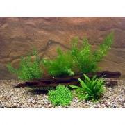 Aquariumplanten Garnalen en Dwergkreeft Assortiment - 5 Plantensoorten