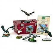 Three-dimensional picture book realistic figure box Raptor box (raptors eagles, hawks earth)