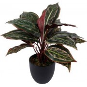 Bomont Collection Kunstplant Calathea Sunshine 43cm