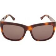 Calvin Klein Wayfarer Sunglasses(Brown)