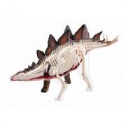 Learn About The Stegosaurus Dinosaur Anatomy 11 Inch 4 D See Thru Model (Age 8+)