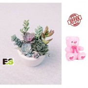 SECCULENT ES LIVE MINI DECORATIVE PLANT With Gift Anniversary Gift Mug